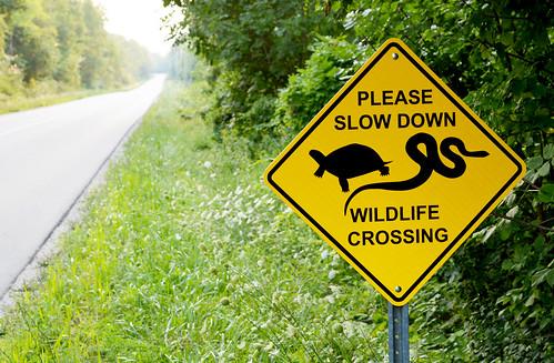 Turtle_Crossing_Sign_NR_2