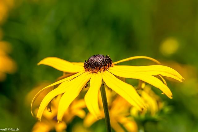 Ein Montagsblümchen