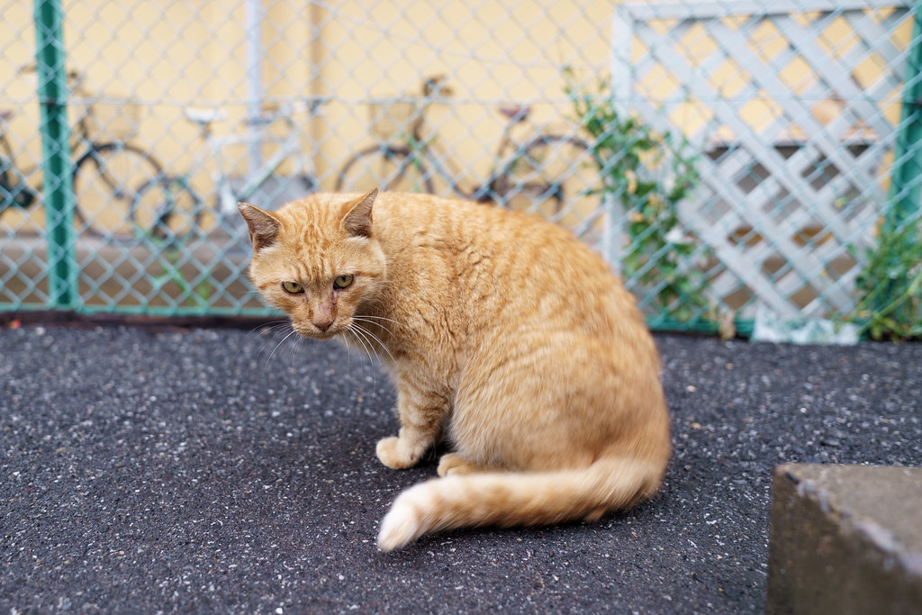 猫 2021/08/08 DSC00370