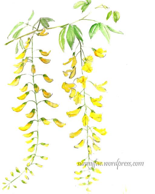 yellow wisteria flowers