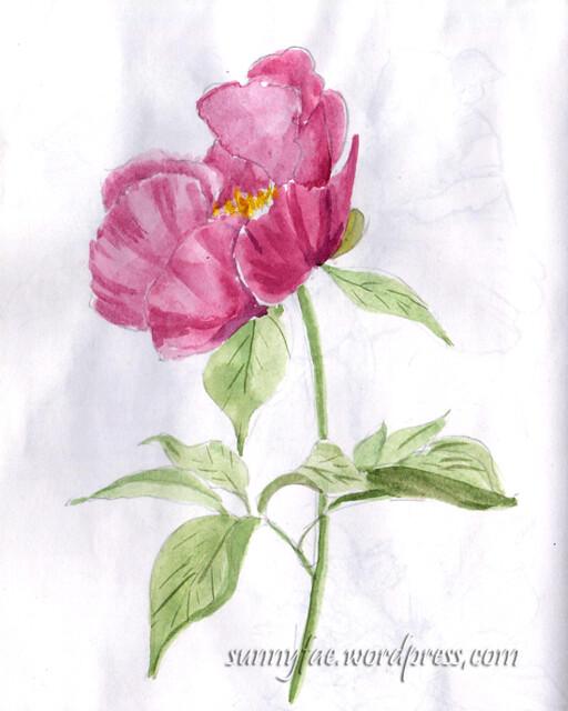 pink peony sketch