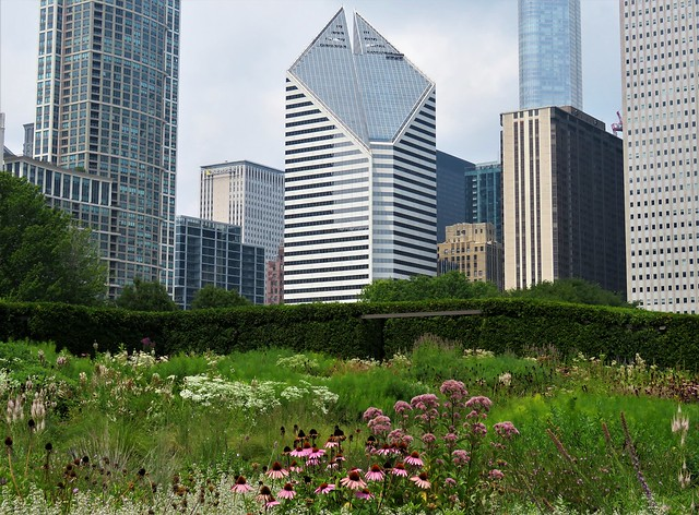 Urban Plantscape