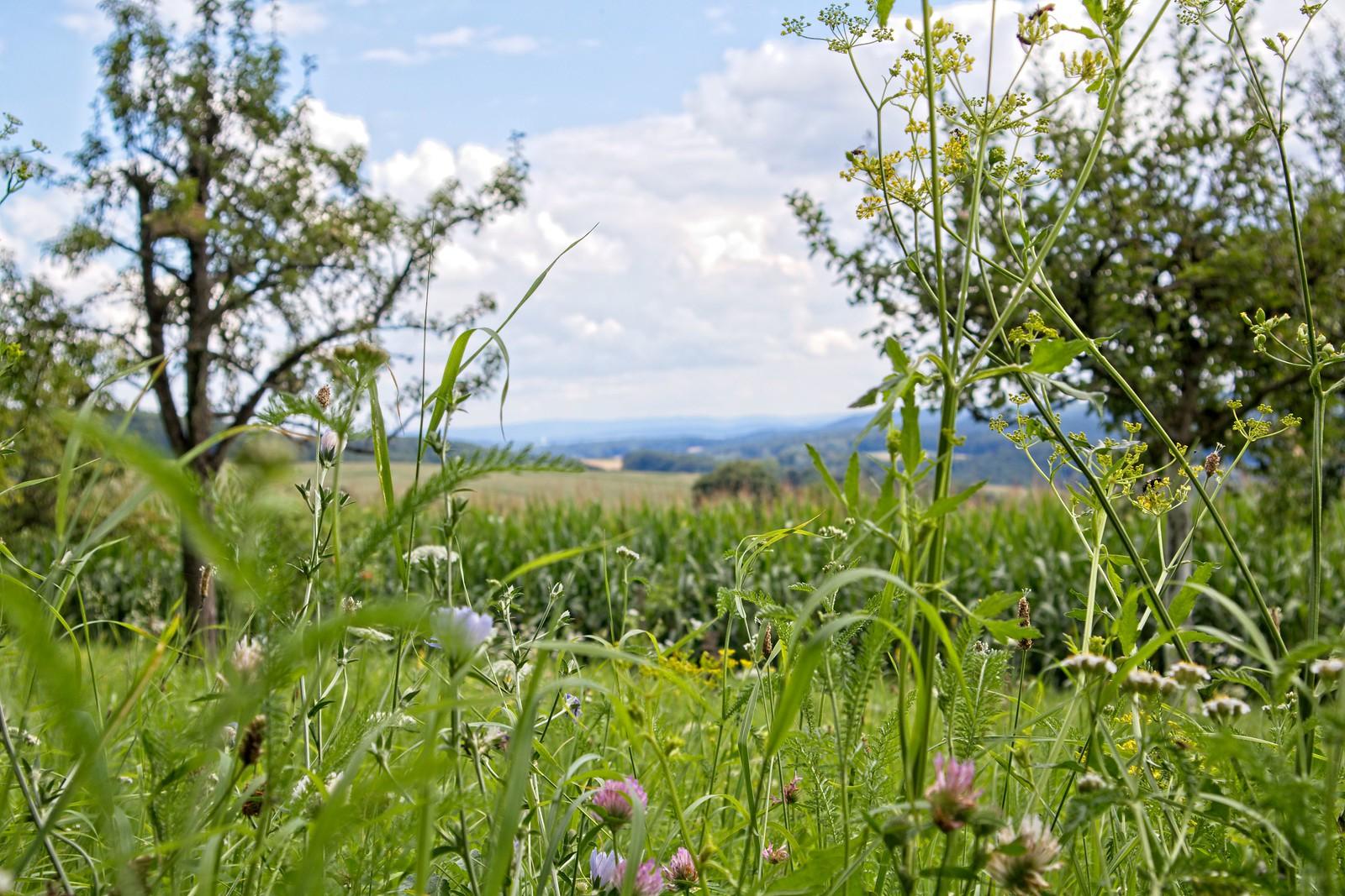 Hügellandschaft und Wälder über Dorndiel
