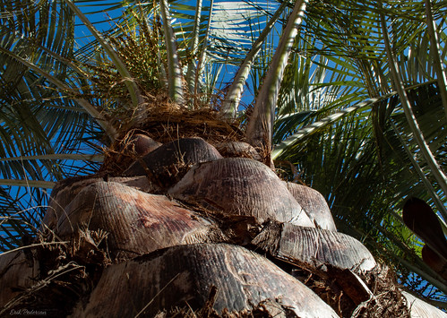 palmtree palm up treetrunk closeup sunny outside
