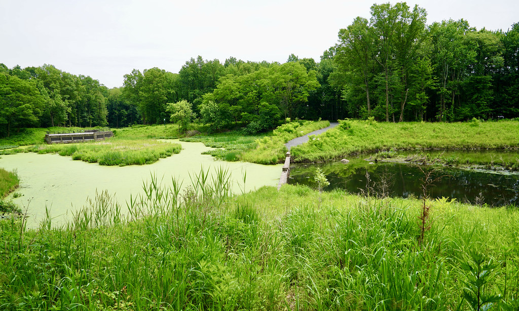 1 - Sweet Brook Bluebelt