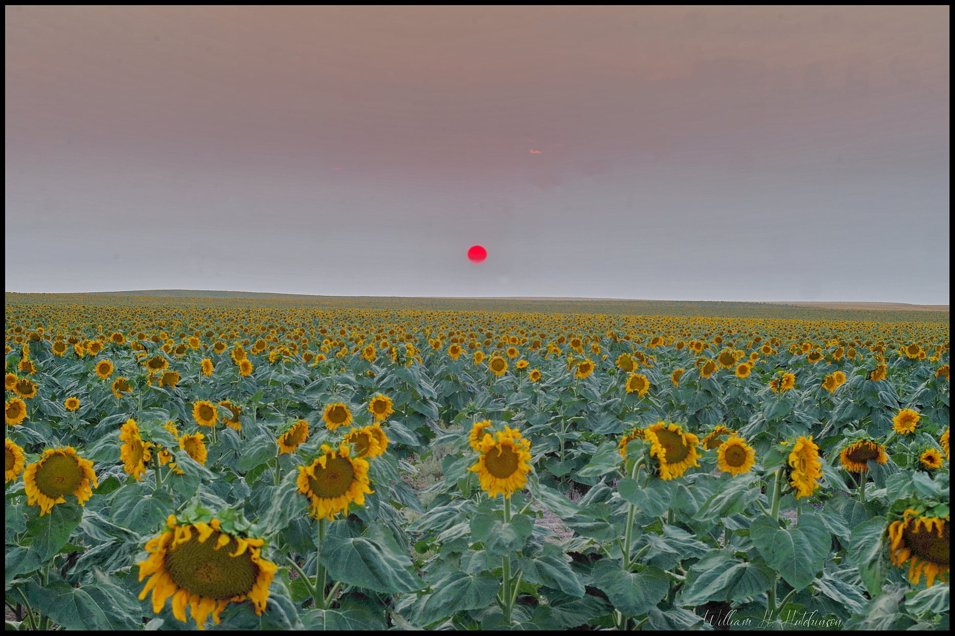 An eerie sunset in Adams County as smoke obscures the setting sun. (Bill Hutchinson)