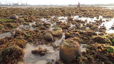 Living shores of Terumbu Raya, Aug 2021