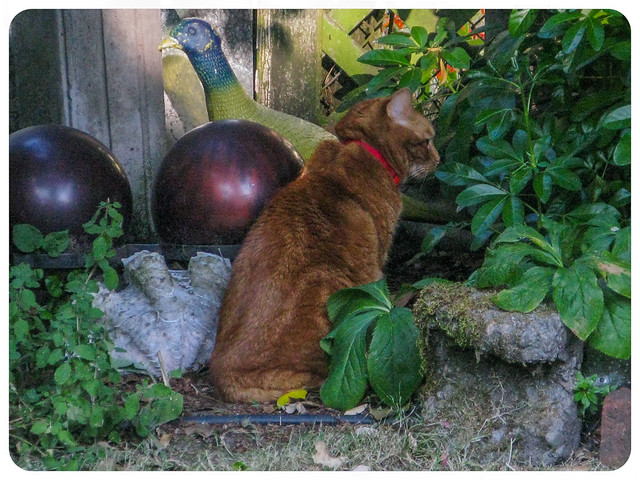 A Cat, A Pheasant and Two Bowling Balls