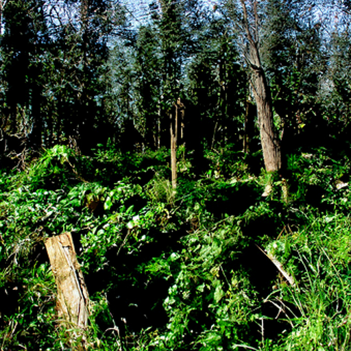 'a forest clearing' CLIP Guided Diffusion v4 Text-to-Image