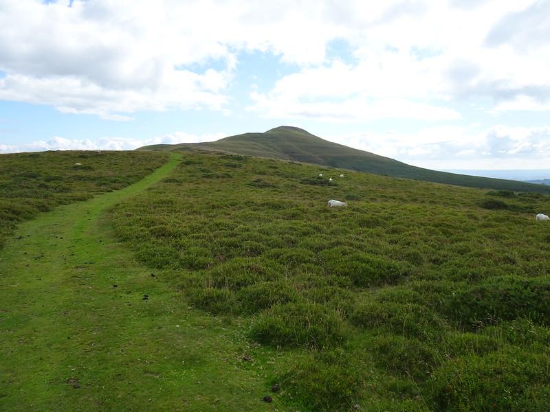 Sugar Loaf Circular: Grassy path up to the summit