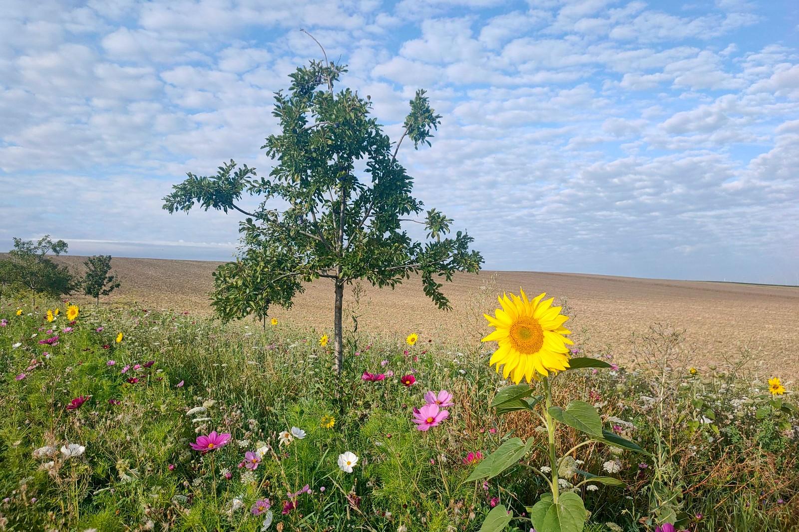 Blühstreifen - Morgenlauf am Selzbogen