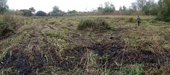 Reedbed and Fen Conservation
