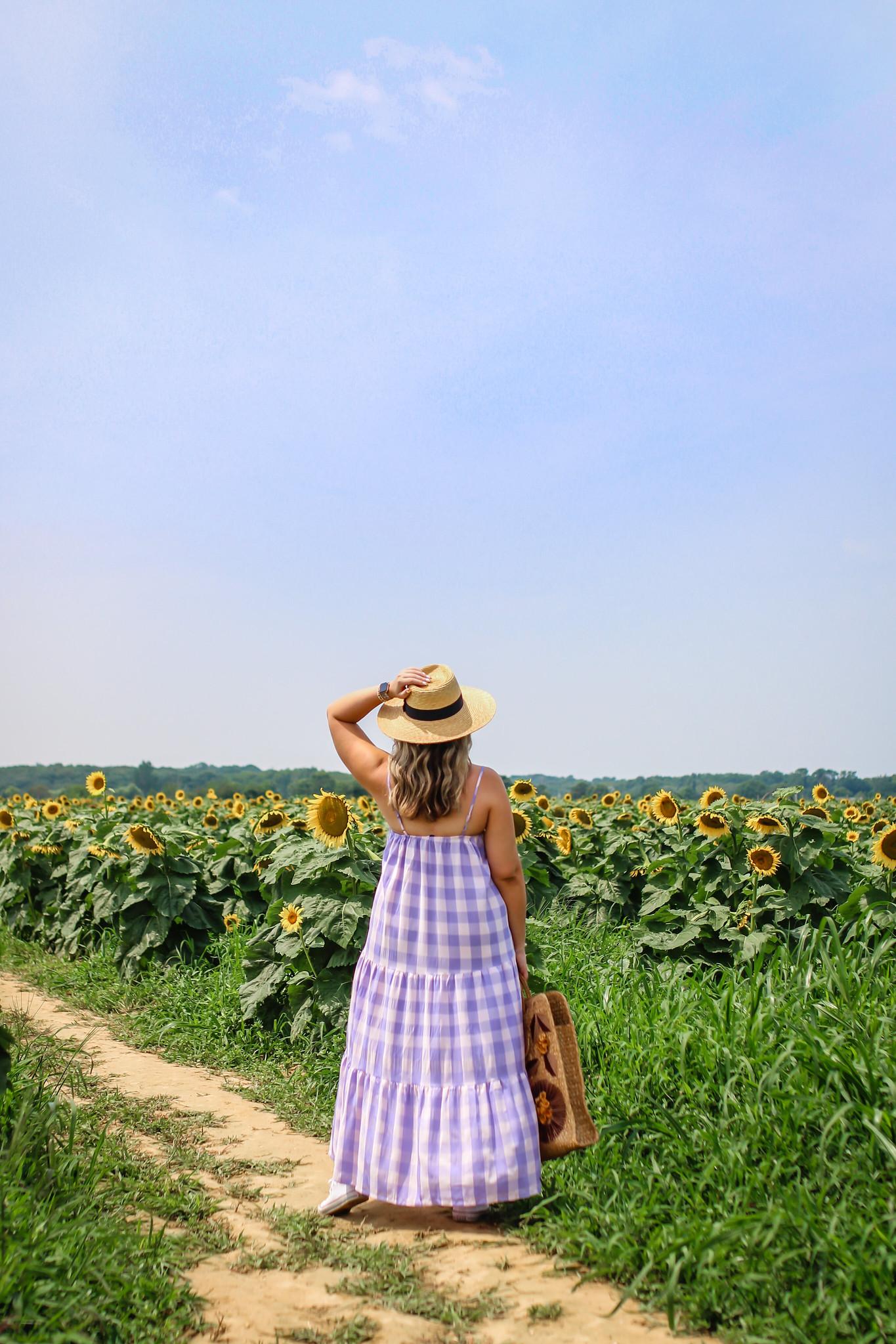Summer fields to visit