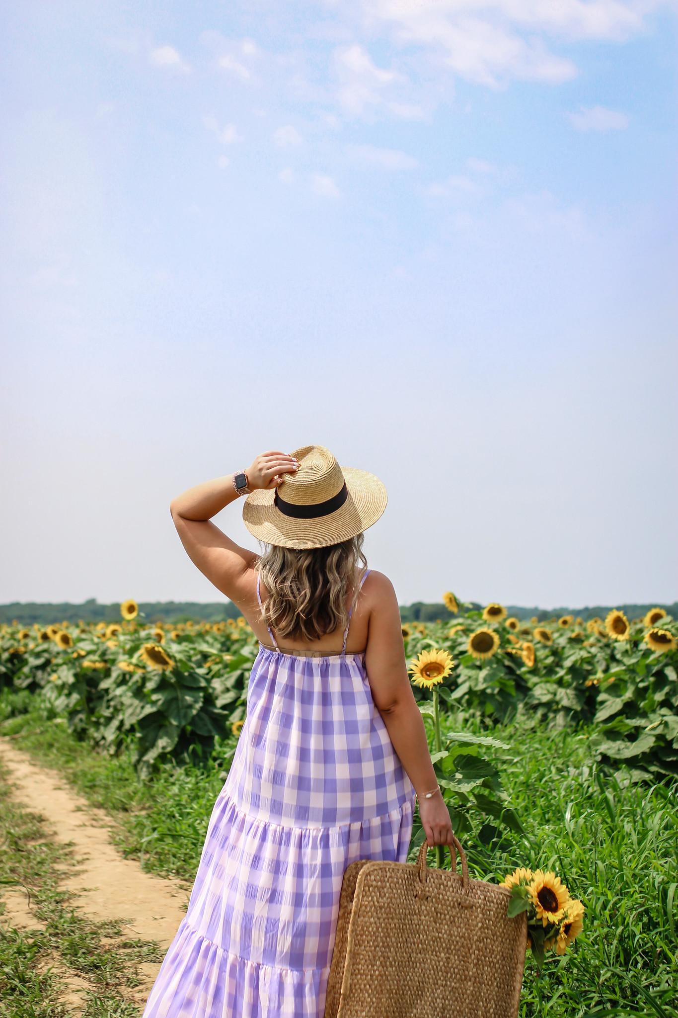 Summer flower fields New York