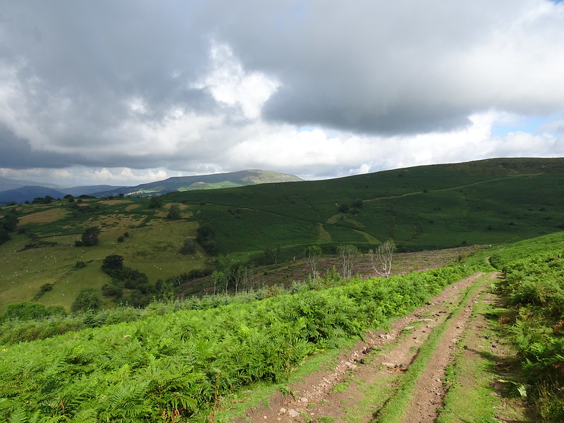 Sugar Loaf Circular: Descent into the (no longer) wooded valley