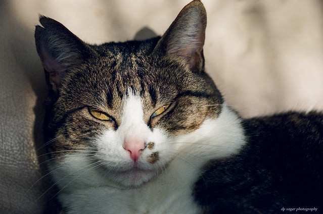 Gabby cat w/ expired film