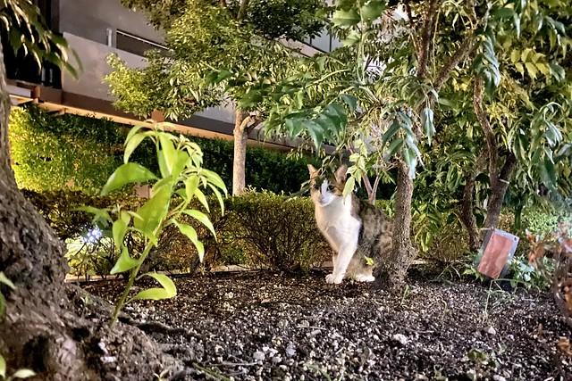 Today's Cat@2021−08−11