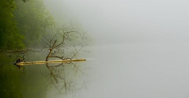 Fog along the river....