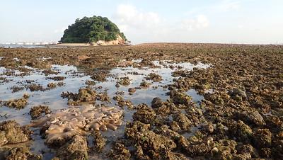 Living shores of Pulau Jong