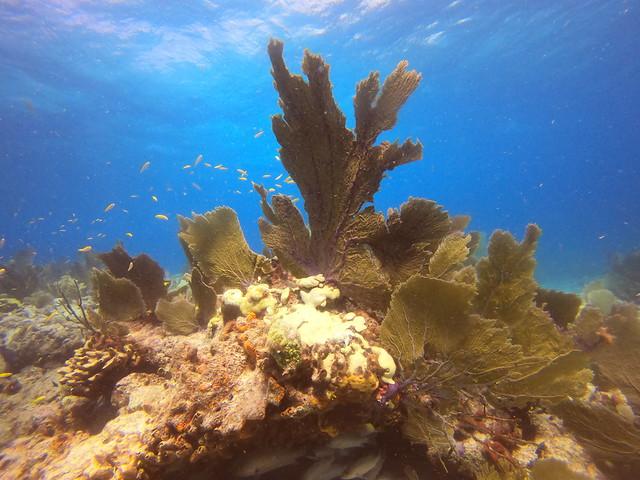 17 AUG 2021 AM Dive/Snorkel Trip