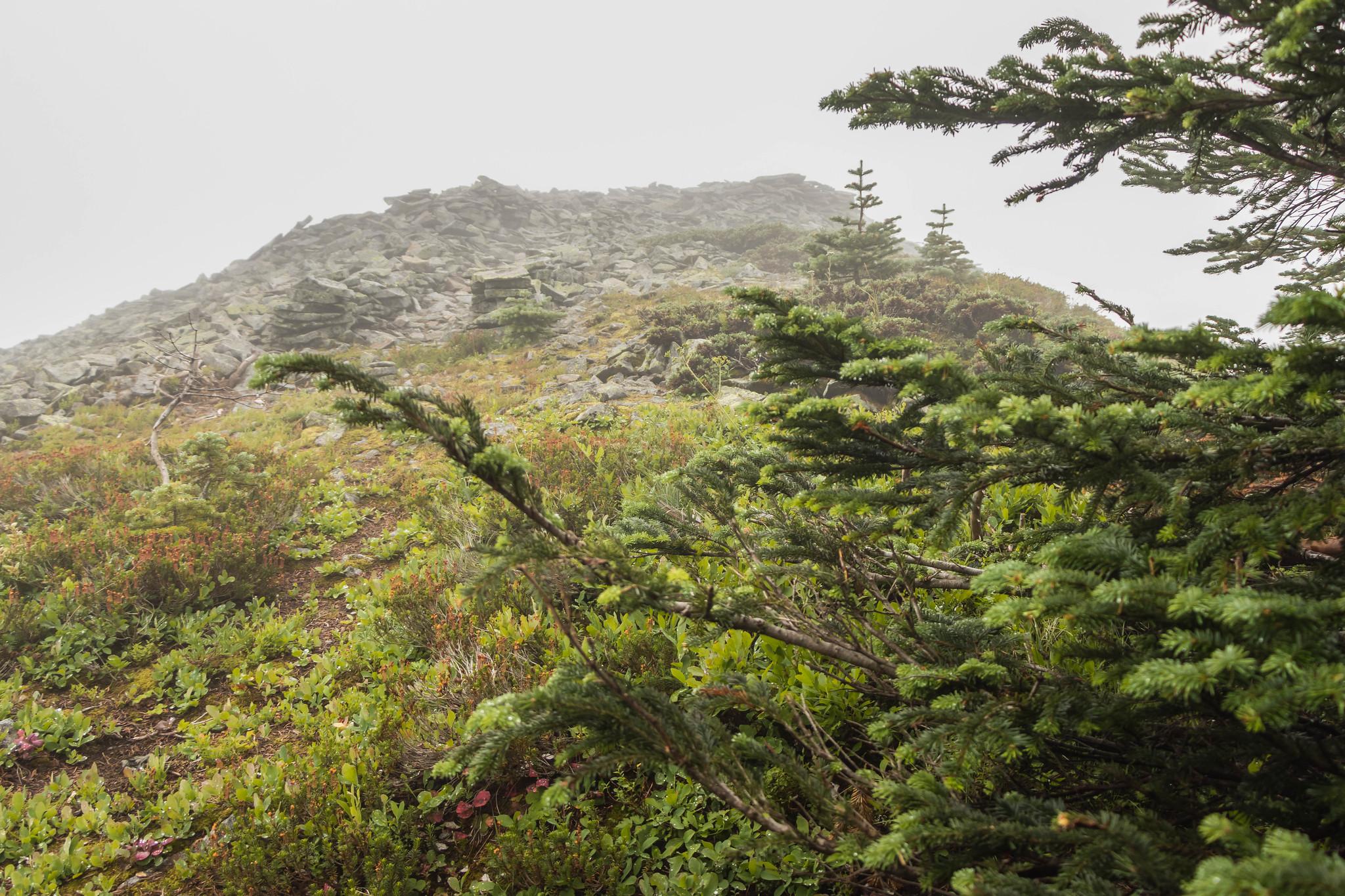Meadow Mountain South Peak at last