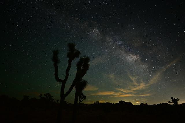 Joshua Tree Cloudy Milky Way