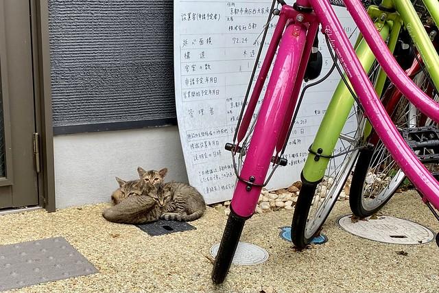 Today's Cat@2021−08−12