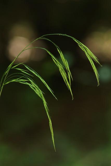 Grasses (in Explore - August 12, 2021)