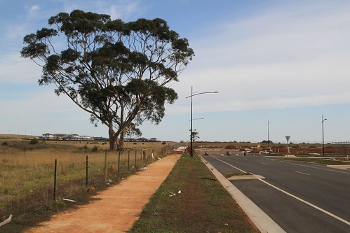 Remnant paddocks still remain beside Caulonia Drive at Olivia Estate in Truganina