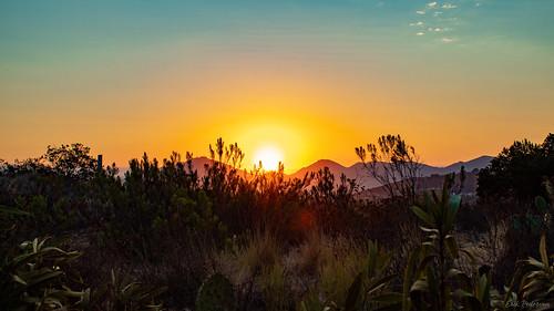 sunrise sunny sky sun landscape sandiego plants silhouette ranchopeñasquitos morning utata:project=tw799