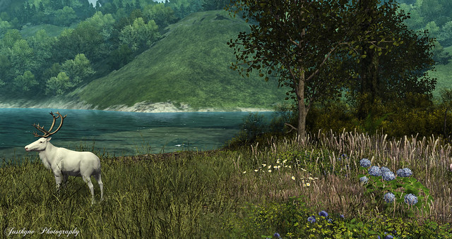 #121 The White Deer - The Dawn (Elvion)