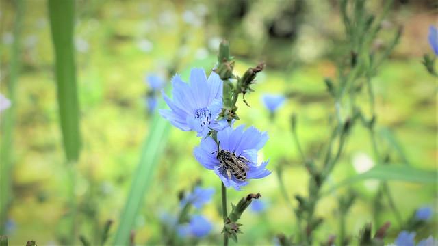 Bee on wild flower