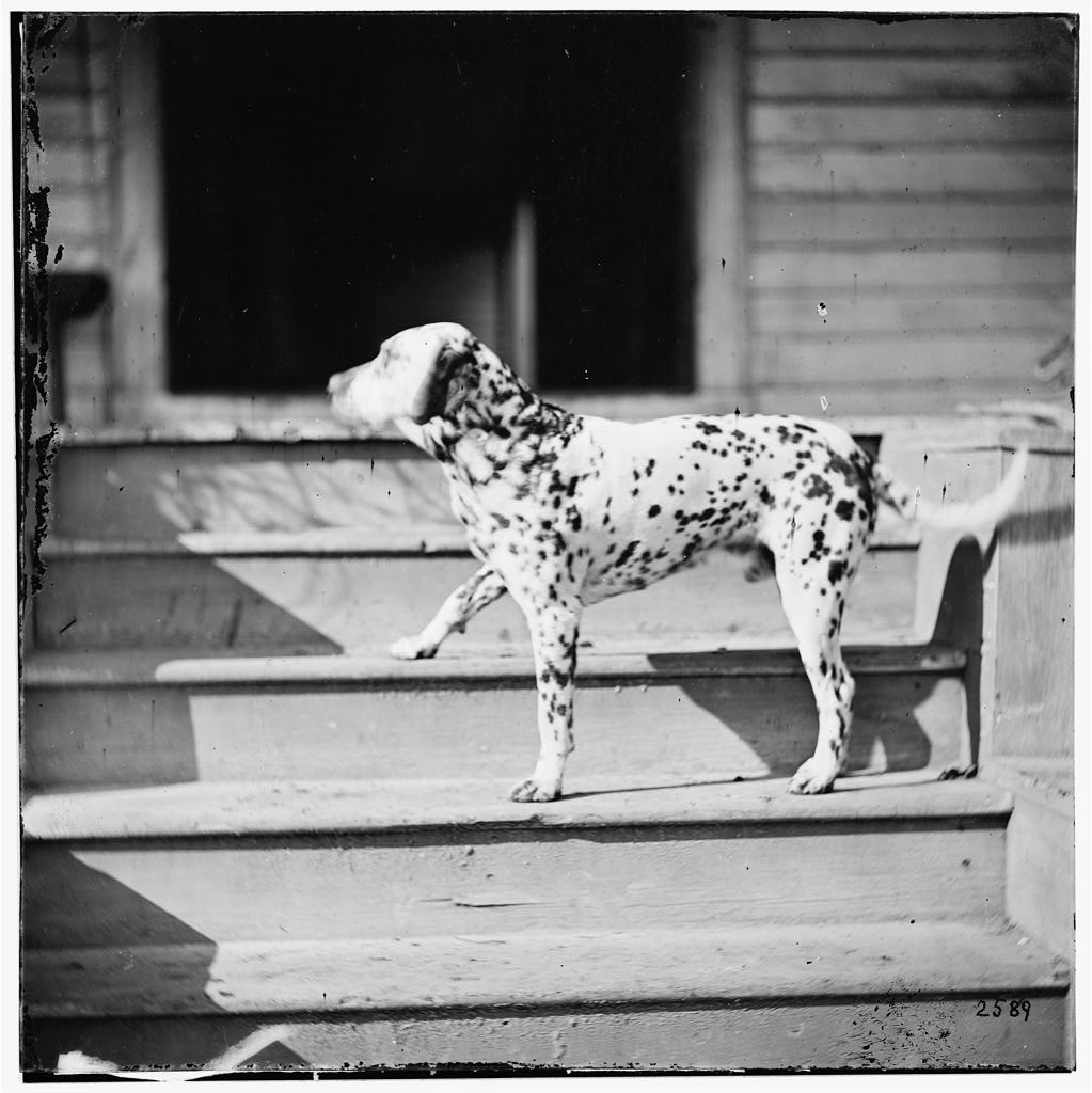 [City Point], Virginia. General Rufus Ingall's coach dog (LOC)