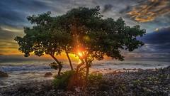Kona Sunsets