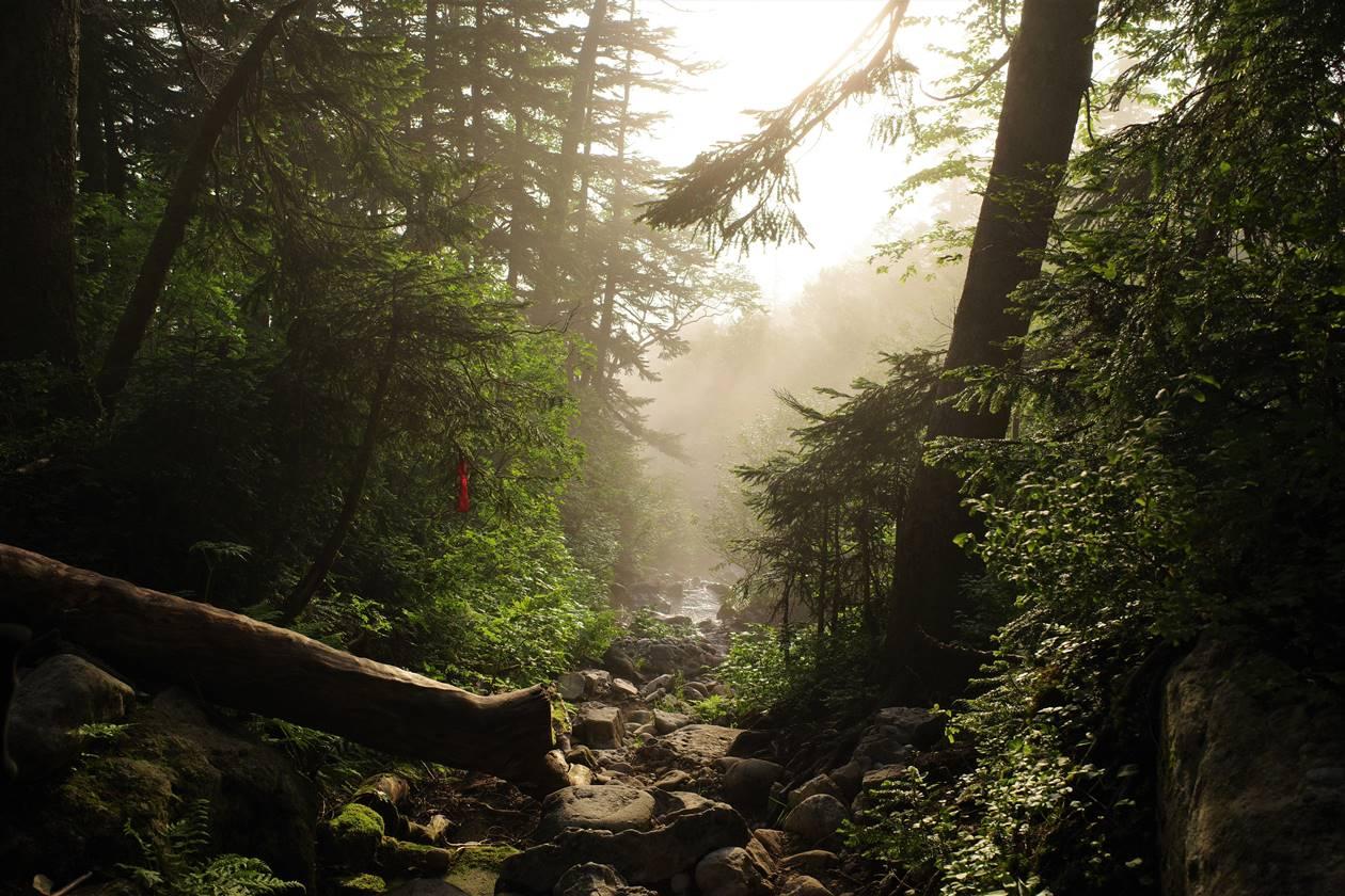 神秘的な森と光