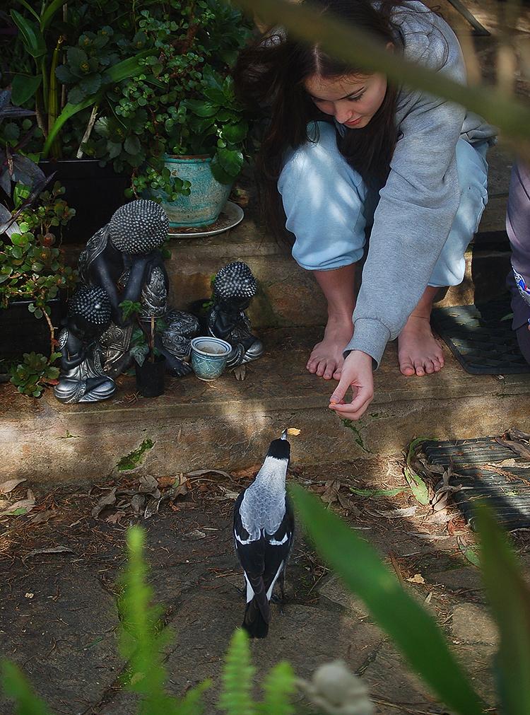 _feeding_magpies_