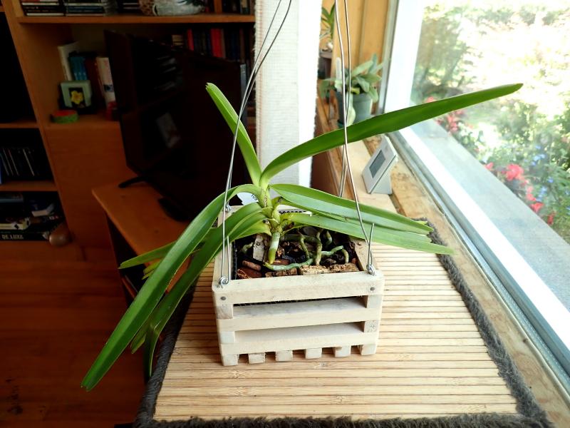 Les Orchidées chez Cloo en 2021 - Page 14 51378470608_7276088c9c_o