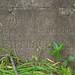Могила Иакова Ивановича Гавриловича, Армянское Кладбище, Кишинев, Республика Молдова / Grave of Yakov Ivanovich Gavrilovich, Armenian Cemetery, Chisinau, Republic of Moldova