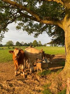 Ein Rundumblick am Bauernhof