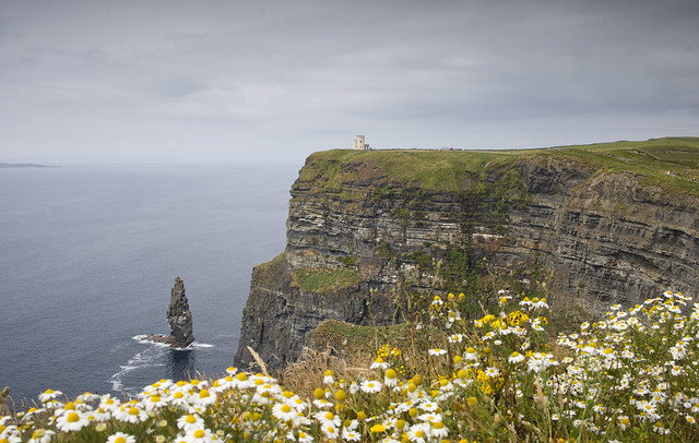Through the Daisies - Cliffs of Moher