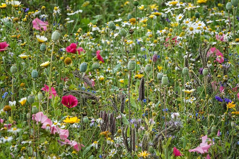 2021w32 The Flower field
