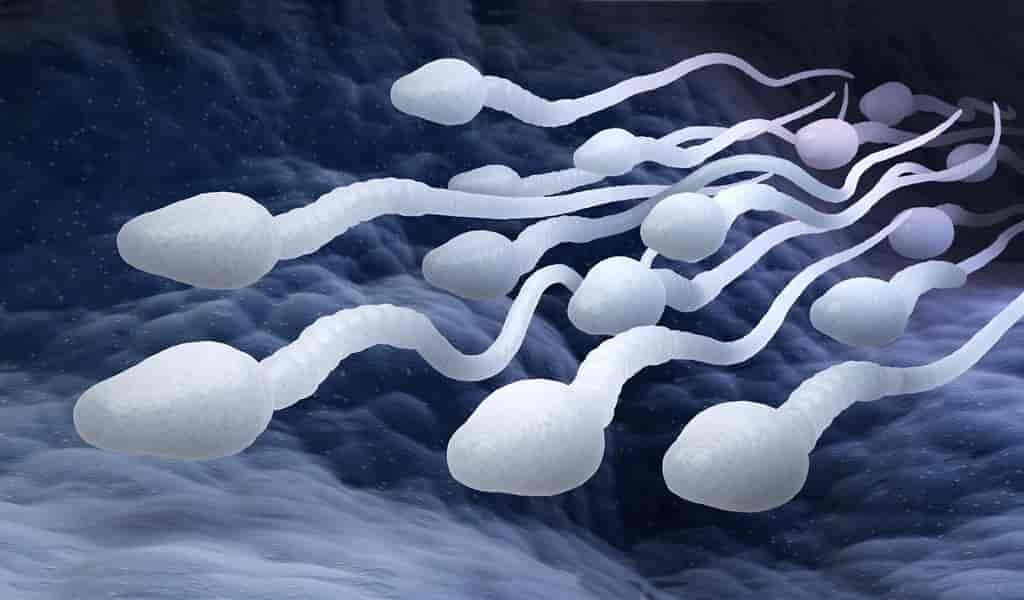 identification-des-mutations-du-sperme-pouvant-causer-des maladies