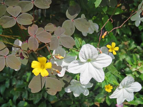 anchor pot plants 2