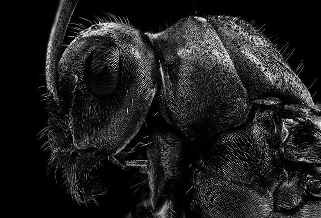 Portrait einer Ameise