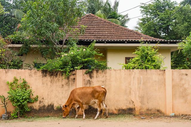 Jaffna | Sri Lanka