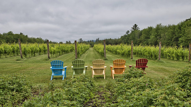 Sit and watch the grapes grow. Lincolnville, ME