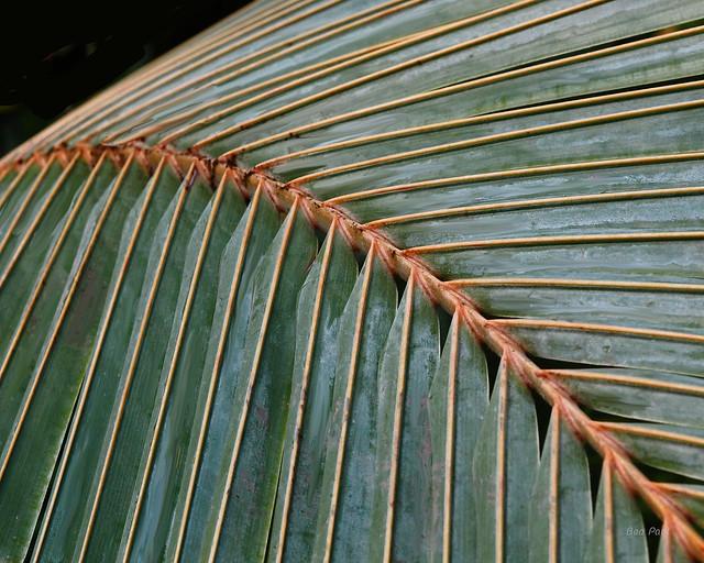 Ben Paul F0355 Palm leave, 2015