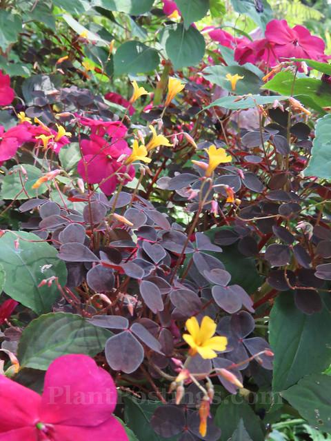 anchor pot plants 1