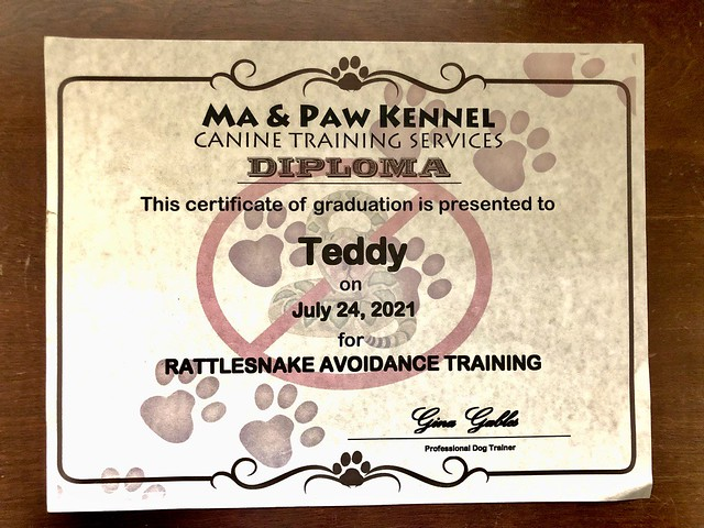 A very important diploma for a California dog