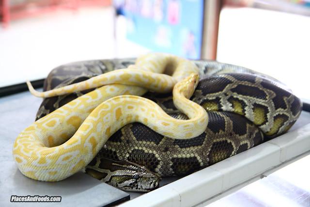 penang snake temple pythons